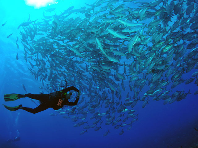 td-tikehau-diving-photo-